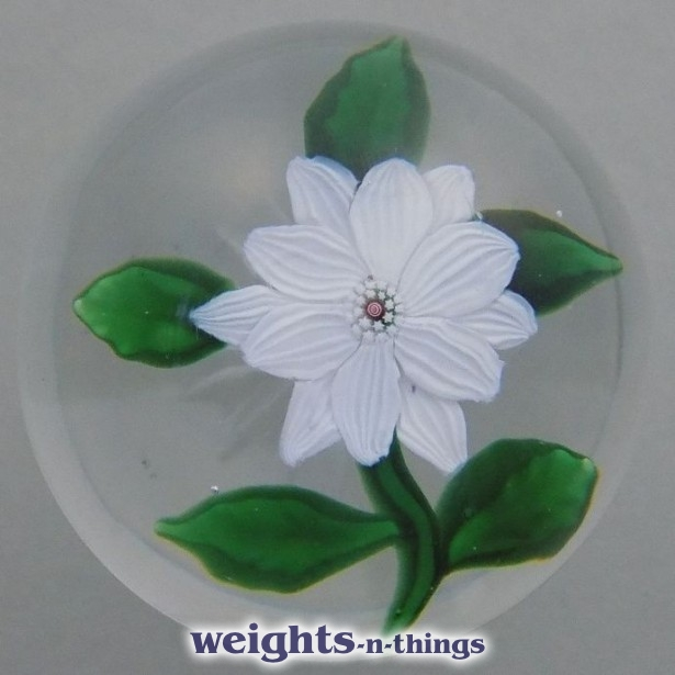 White Double Clematis